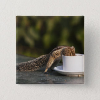 Squirrel drinking from coffee cup at Indian Pinback Button