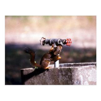 Squirrel drinking postcard