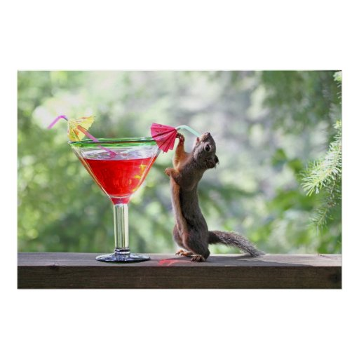 Squirrel Drinking Tropical Drink Poster