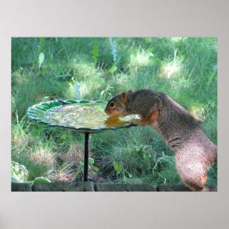 Squirrel drinking water print