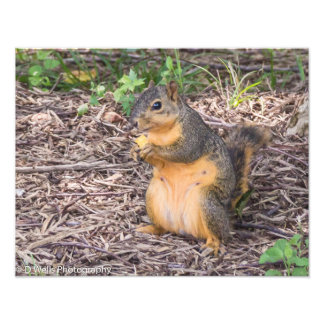 Squirrel eating a chip photograph