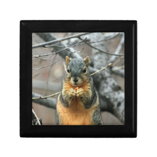 Squirrel Eating a Nut Jewelry Box