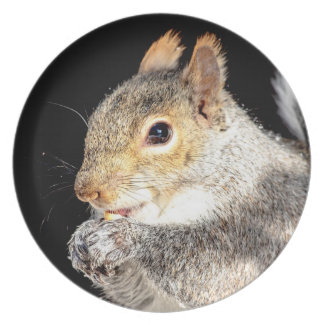 Squirrel eating a nut melamine plate