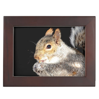 Squirrel eating a nut memory box