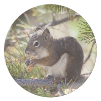 Squirrel eating a pine cone 2 melamine plate