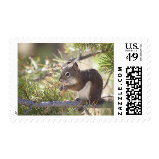 Squirrel eating a pine cone 2 postage stamp