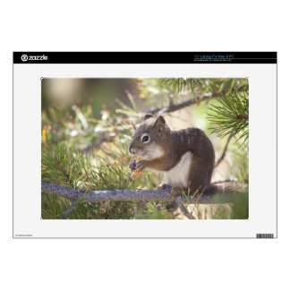 """Squirrel eating a pine cone 2 decals for 15"""" laptops"""