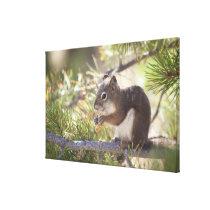 Squirrel eating a pine cone canvas print