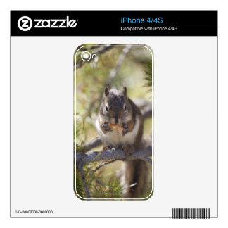 Squirrel eating a pine cone decals for the iPhone 4