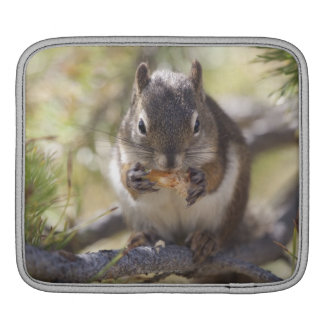 Squirrel eating a pine cone iPad sleeve