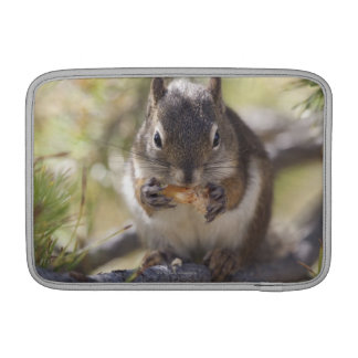 Squirrel eating a pine cone MacBook air sleeve