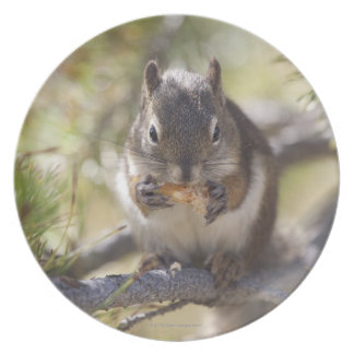 Squirrel eating a pine cone melamine plate