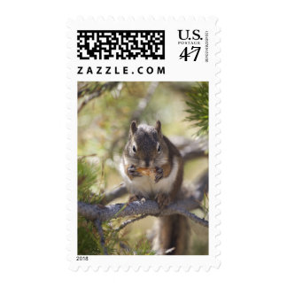 Squirrel eating a pine cone postage