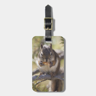 Squirrel eating a pine cone tag for luggage
