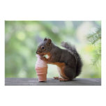Squirrel Eating an Ice Cream Cone Poster