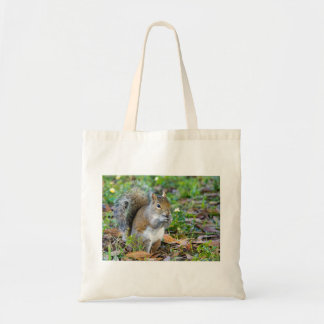 Squirrel Eating Bag