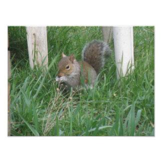 Squirrel Eating Bird Seed Photo Print