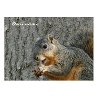 squirrel eating large business cards (Pack of 100)