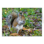 Squirrel Eating Card