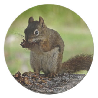 Squirrel eating Cone Dinner Plate