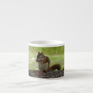 Squirrel eating Cone Espresso Cup