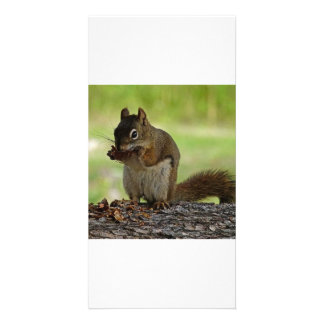 Squirrel eating Cone Personalized Photo Card