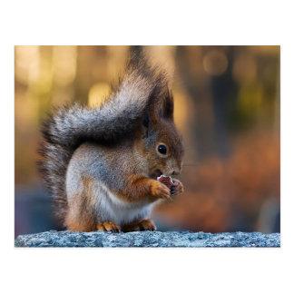 Squirrel eating cookie postcard