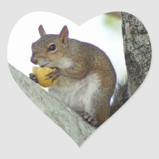 Squirrel eating Corn chip Stickers