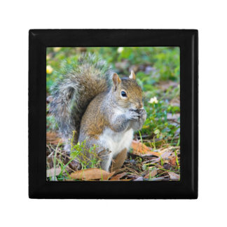 Squirrel Eating giftbox Jewelry Box