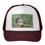 Squirrel Eating Hat