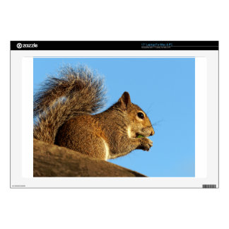 """Squirrel Eating in a Tree Against Clear Blue Sky 17"""" Laptop Decal"""