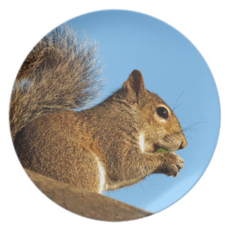 Squirrel Eating in a Tree Against Clear Blue Sky Plate