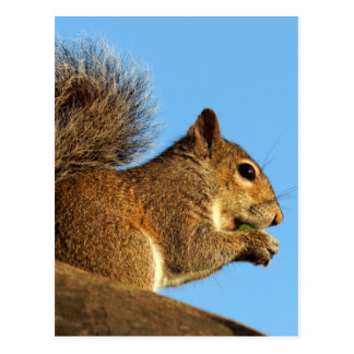 Squirrel Eating in a Tree Against Clear Blue Sky Postcard