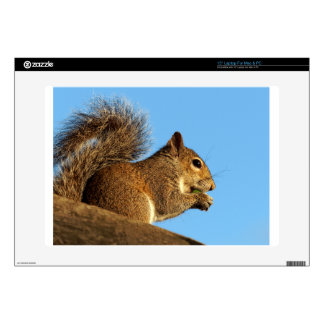 Squirrel Eating in a Tree Against Clear Blue Sky Skins For Laptops