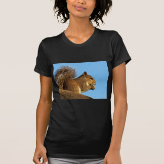 Squirrel Eating in a Tree Against Clear Blue Sky T Shirt