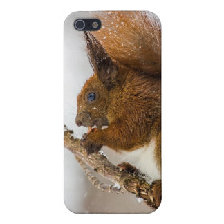 Squirrel Eating In A Tree Cases For iPhone 5