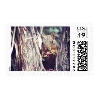 Squirrel Eating in a Tree Postage