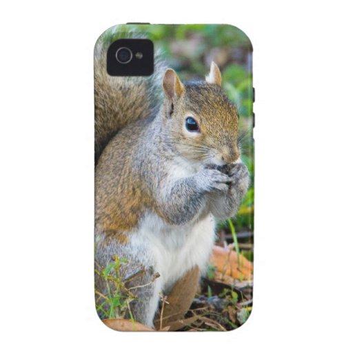 Squirrel Eating iPhone 4 Case