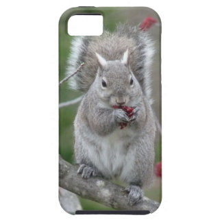 Squirrel eating iPhone SE/5/5s case