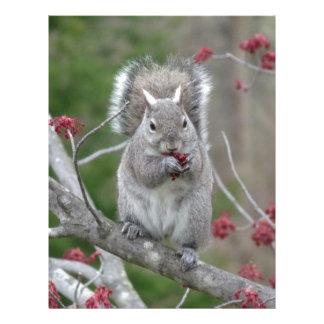 Squirrel eating letterhead