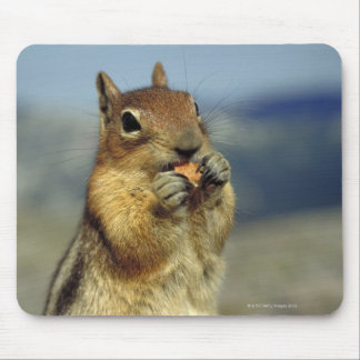 Squirrel eating mouse pad