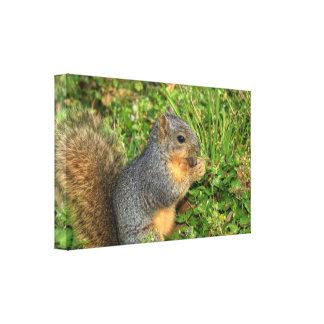 Squirrel Eating Nut Canvas Prints Premium