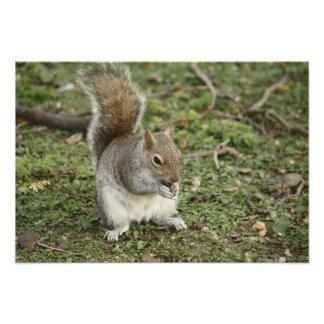 Squirrel Eating Nut Photo Print