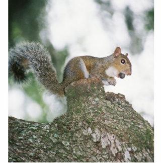 Squirrel eating nut statuette