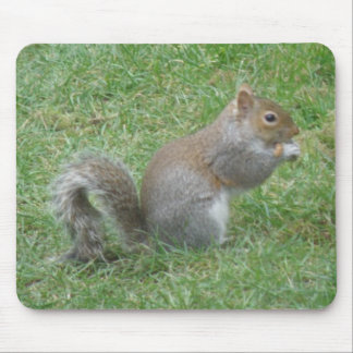 Squirrel Eating on the Lawn Mousepad