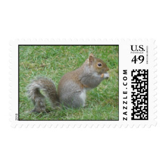 Squirrel EAting on the Lawn Postage Stamps