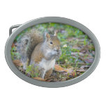 Squirrel Eating Oval Belt Buckle