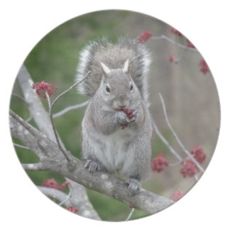 Squirrel eating plate