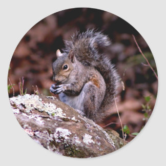 Squirrel enjoying His Meal Classic Round Sticker