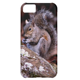 Squirrel enjoying His Meal Cover For iPhone 5C